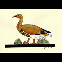 Peinture Sur Papier Type Canson : Oies De Meidoum - 25Ko