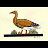 Peinture Sur Papier Type Canson : Oies De Meidoum